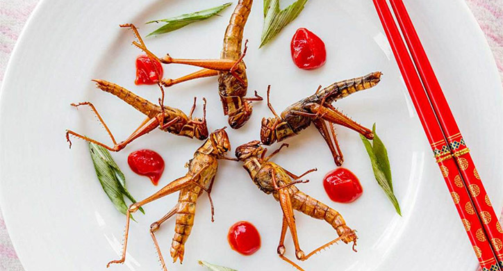 Insects: A New Protein Source