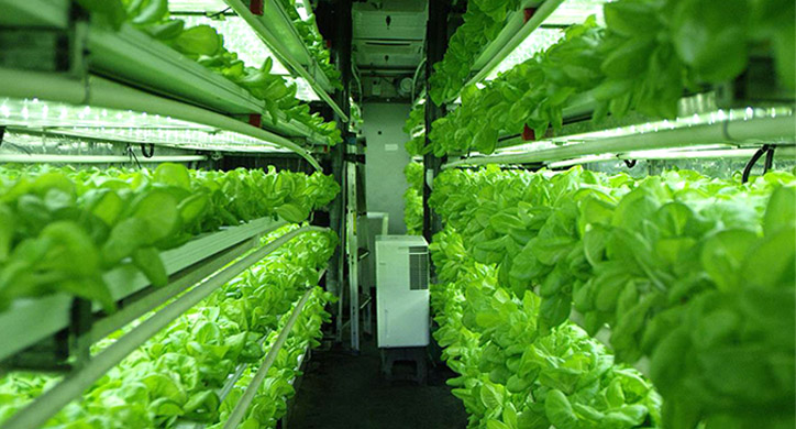 The Challenges of Indoor Farming