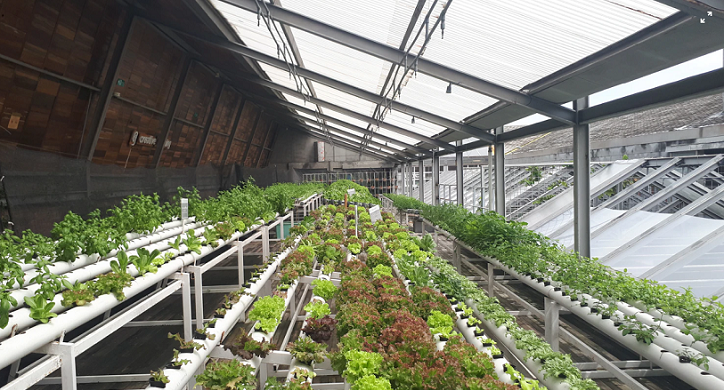Can Technology Save Urban Farming?