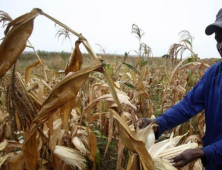 Bettering Farms in Zimbabwe…and Beyond