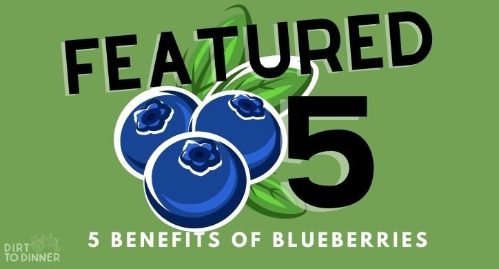 5 Benefits of Blueberries