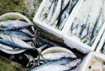 Making the Case for Sustainable Aquaculture